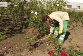 VIDEO Jesenske aktivnosti gradskih vrtlara