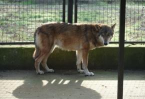 Tijek događaja vezan uz bijeg vučice iz Zoološkog vrta