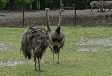 Nove životinje stigle su u Zoološki vrt u Osijeku